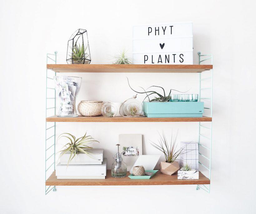 Nieuwe plantentrend: de epifyt