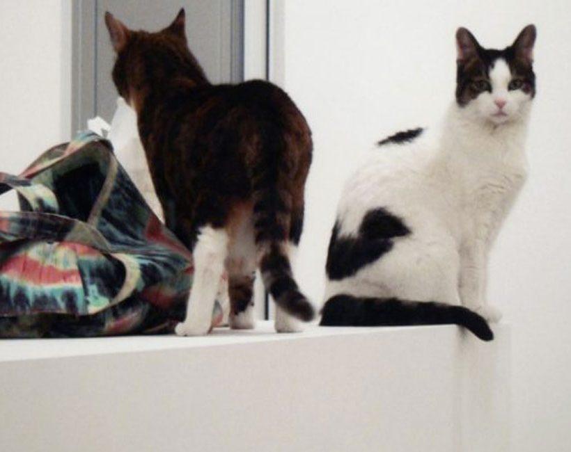 Een kat heeft zeven (stil)levens – Expo in Brussel