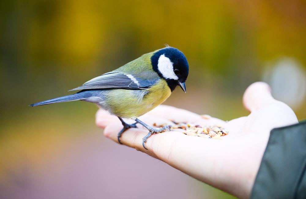 Vergeet de vogels deze zomer niet!