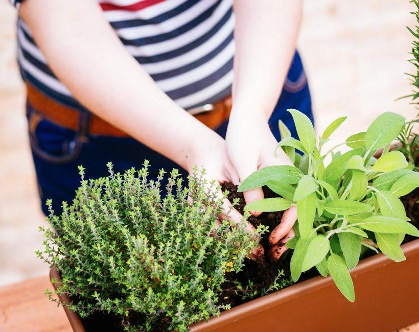 Hoe kweek je best groenten en kruiden op een balkon?