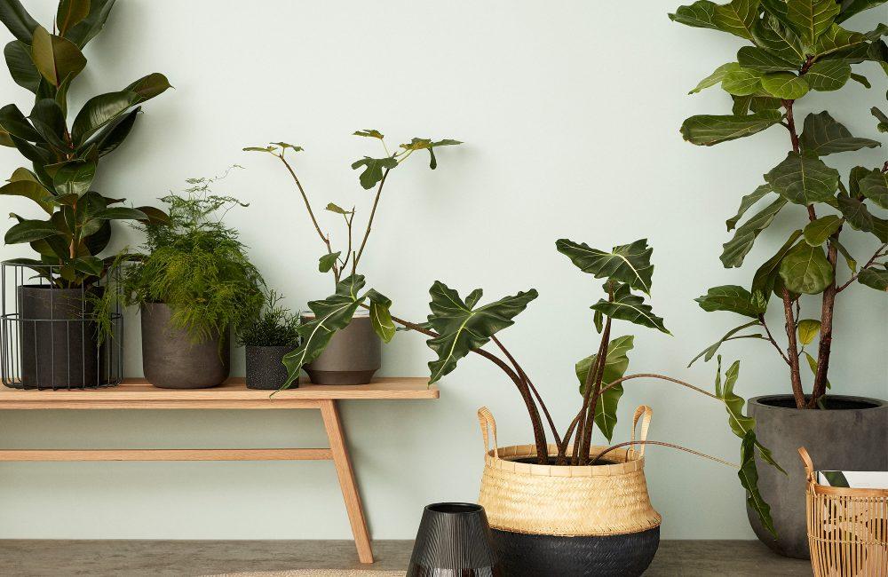 Welke kamerplant hoort thuis in welke ruimte?