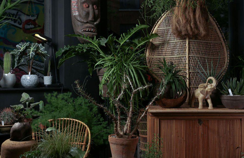 Groen om te doen: 10 x de leukste planten- en bloemenwinkels in eigen land