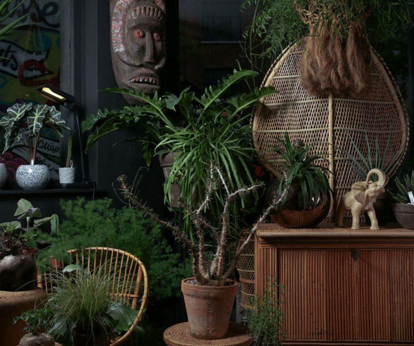 Groen om te doen: de leukste planten- en bloemenwinkels in eigen land