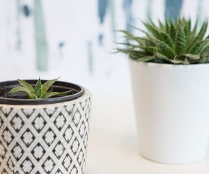 Hoe stek je de meest hippe planten van dit moment?