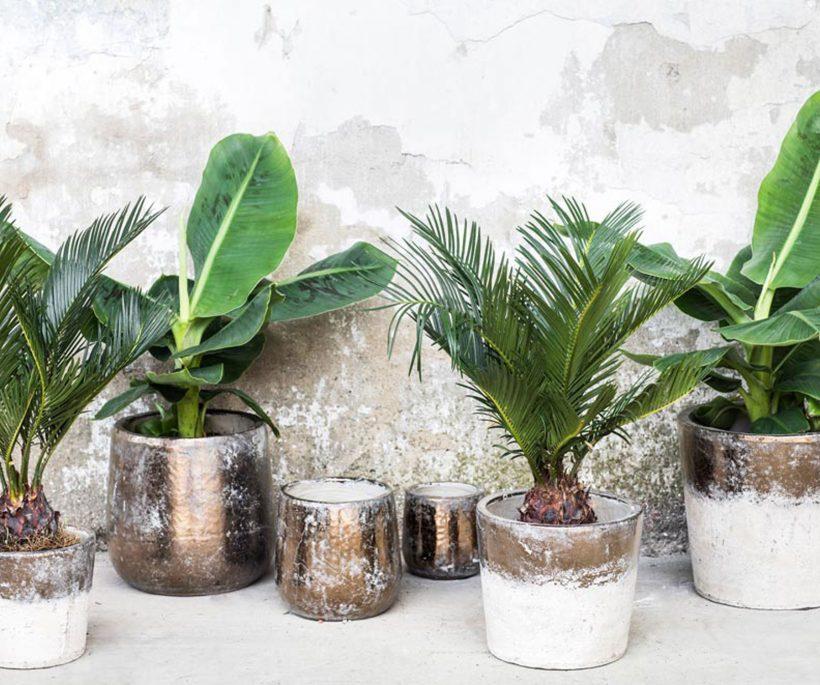 Shopping: verwen je planten met de leukste bloempotten!