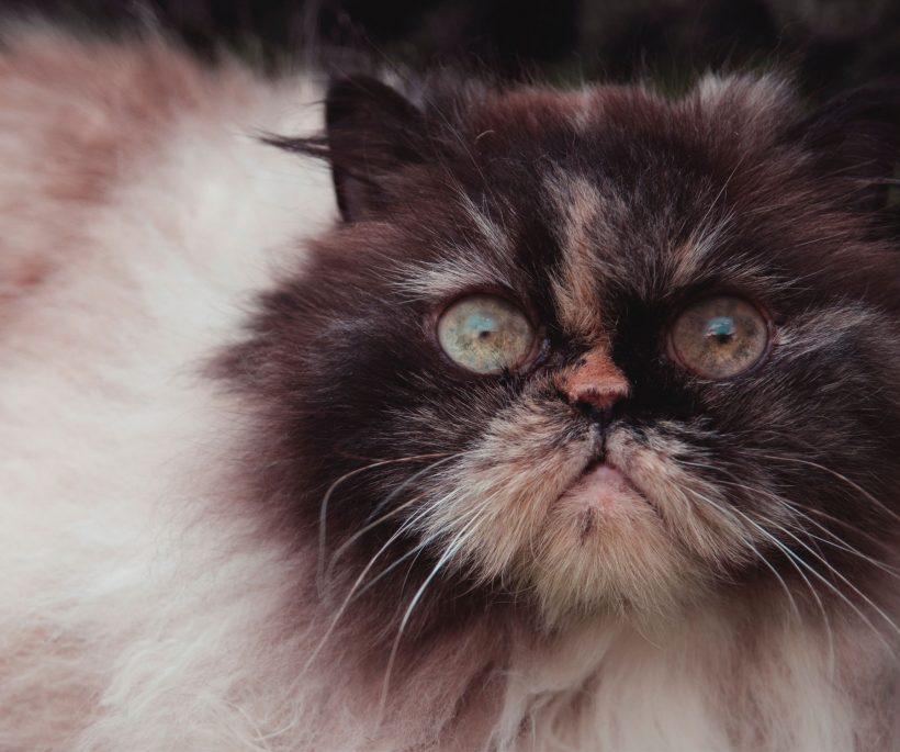 Kattenstreken: het purrr-fecte leesvoer voor cat addicts
