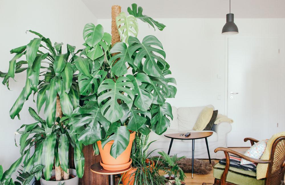 Deze budgetwinkel verkoopt kamerplanten aan een spotprijs binnenkort