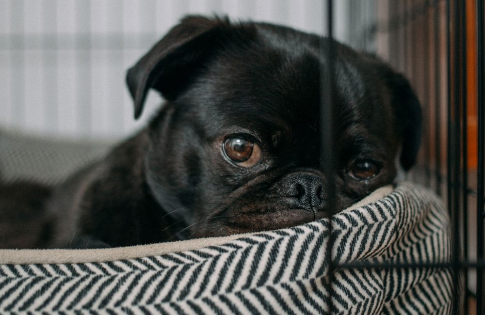 Vier werelddierendag met de leukste items voor je huisdier!