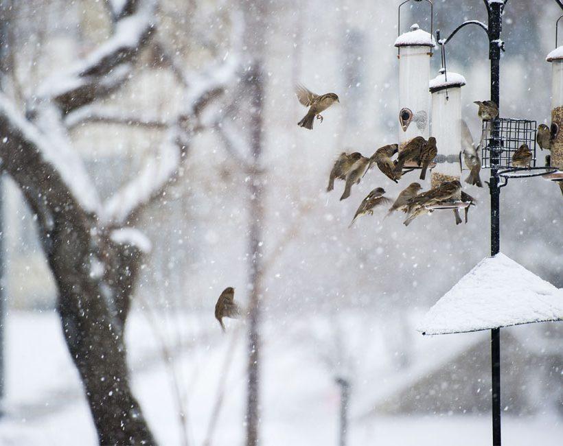 Vogels in de herfst, waarop moet je letten?