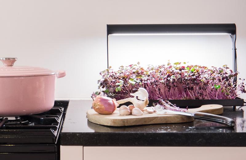 Een moestuin in eigen keuken met MicroFarm