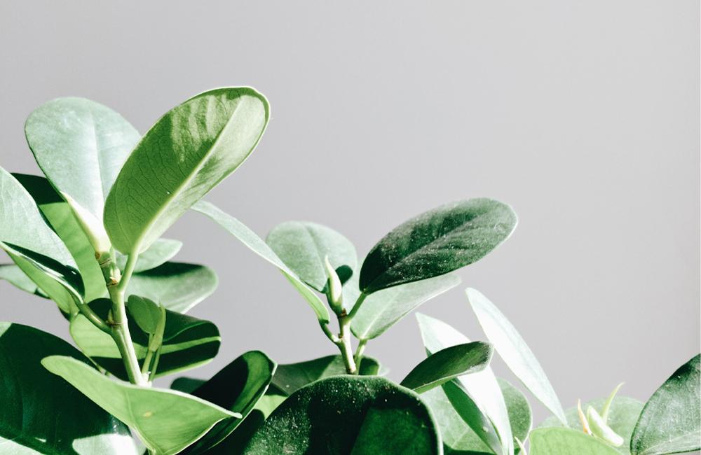 Alles over kamerplanten in een lichtrijk huis