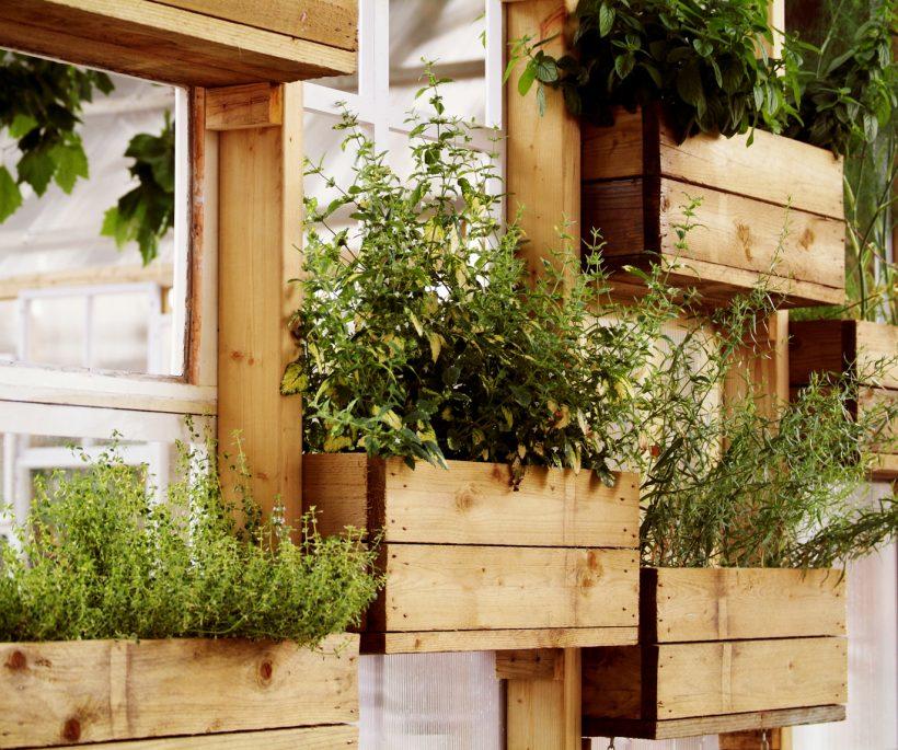 Zo kweek je groenten en kruiden in je stadsmoestuin vanop je eigen balkon