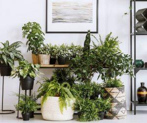DIY: 5 ideeën om je eigen plantenbak te creëren