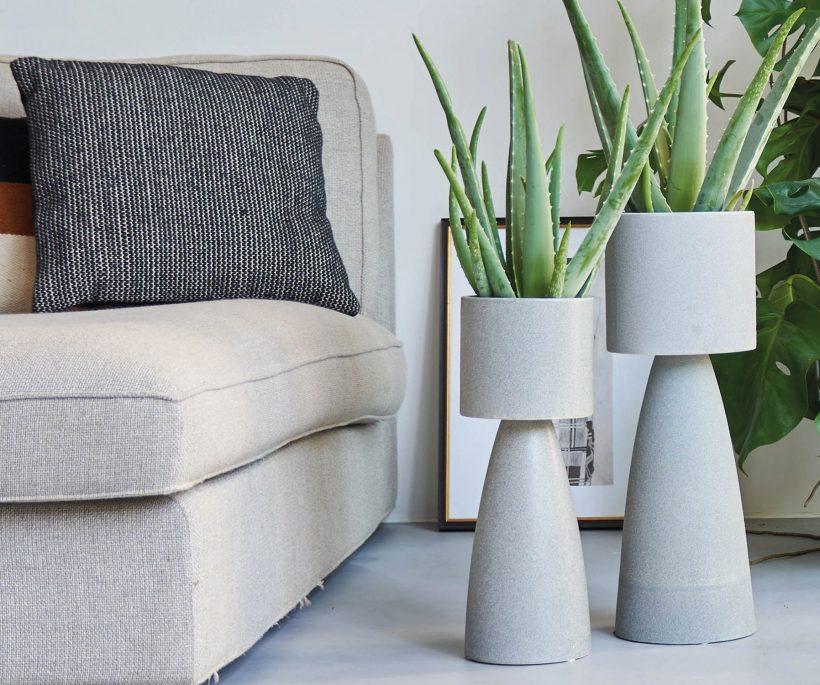 Voor elke plant een potje: zo kies je de juiste bloempot voor je kamerplant